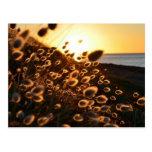 puesta del sol a través de la hierba postal