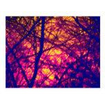 Puesta del sol a través de la postal de las ramas