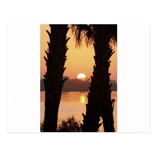 Puesta del sol a través de las palmeras tarjetas postales
