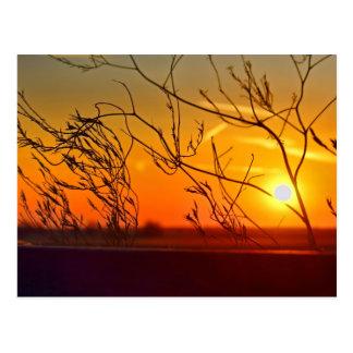 Puesta del sol a través de los arbustos tarjetas postales