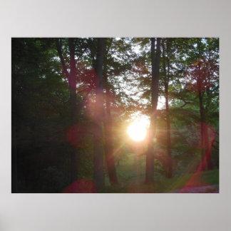 Puesta del sol a través del poster de los árboles