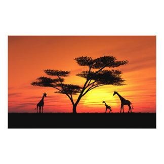 Puesta del sol africana cojinete