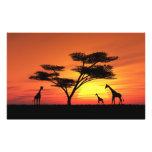 Puesta del sol africana fotografias