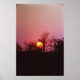Puesta del sol africana posters
