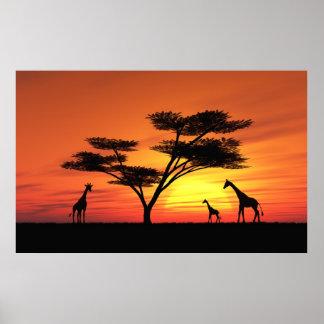 Puesta del sol africana poster