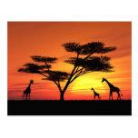 Puesta del sol africana tarjeta postal