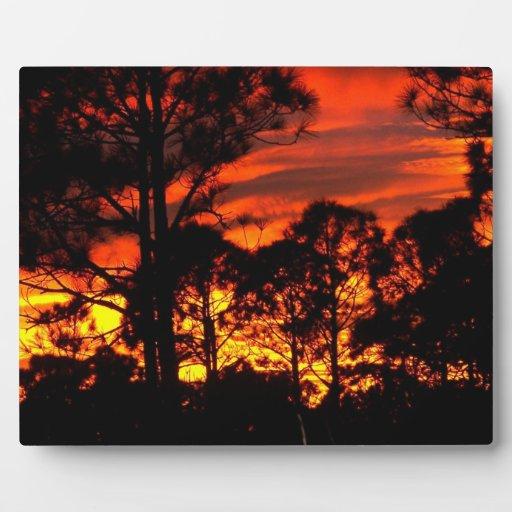 Puesta del sol con amarillo rojo de los pinos placas de plastico