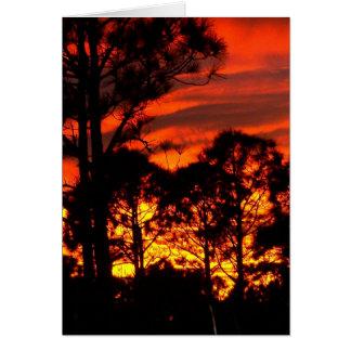 Puesta del sol con amarillo rojo de los pinos tarjetas