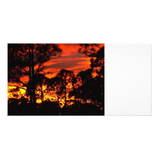 Puesta del sol con amarillo rojo de los pinos tarjetas fotograficas personalizadas