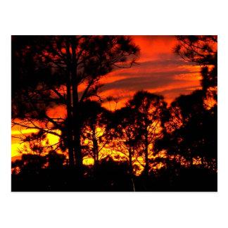 Puesta del sol con amarillo rojo de los pinos tarjetas postales