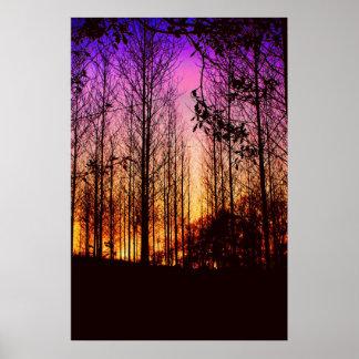 puesta del sol con el color de los árboles cambiad poster