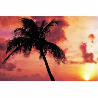Puesta del sol con la palma