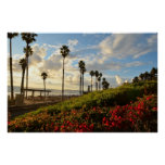 Puesta del sol con las palmeras y Borgenvillia Impresiones