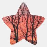 Puesta del sol contra los árboles pegatina en forma de estrella