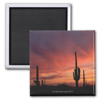 Puesta del sol de Arizona sobre los cactus del Imán Cuadrado