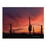 Puesta del sol de Arizona sobre los cactus del Postales