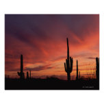 Puesta del sol de Arizona sobre los cactus del Póster