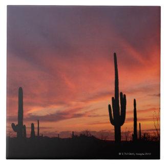 Puesta del sol de Arizona sobre los cactus del sag Azulejo Cuadrado Grande
