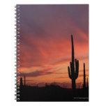 Puesta del sol de Arizona sobre los cactus del sag Libro De Apuntes