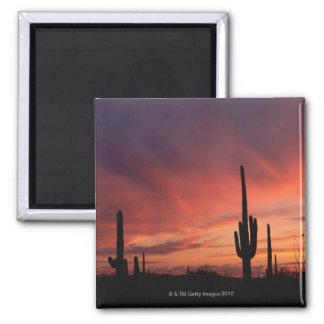 Puesta del sol de Arizona sobre los cactus del sag Imán