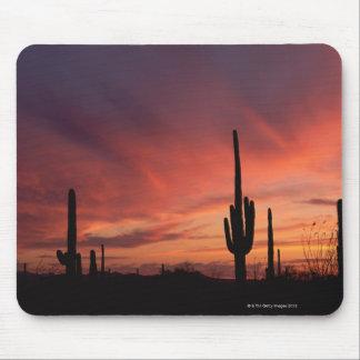 Puesta del sol de Arizona sobre los cactus del sag Tapetes De Ratón
