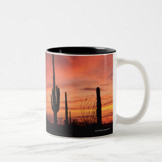Puesta del sol de Arizona sobre los cactus del Taza De Dos Tonos