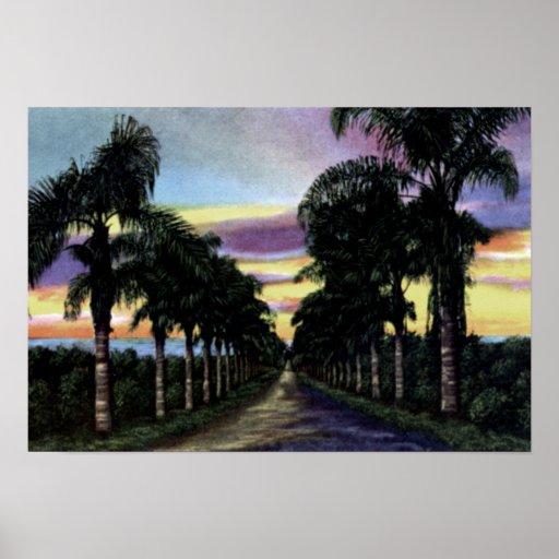 Puesta del sol de California que muestra las palma Impresiones