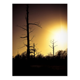 Puesta del sol de Cypress Postal