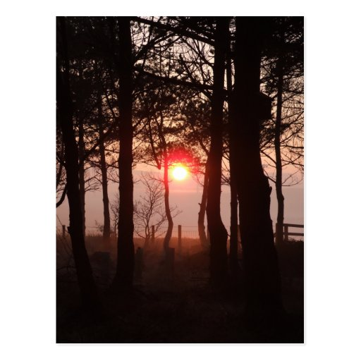 Puesta del sol de febrero tarjetas postales