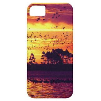 Puesta del sol de la costa costa, pájaros funda para iPhone 5 barely there
