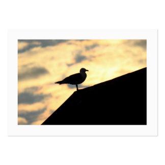 Puesta del sol de la gaviota de arenques (confinad plantillas de tarjetas personales