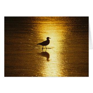 Puesta del sol de la gaviota tarjeta de felicitación