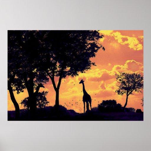 puesta del sol de la jirafa posters