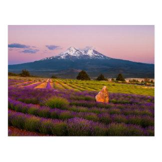 Puesta del sol de la lavanda del Mt. Shasta… Tarjetas Postales