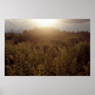 Puesta del sol de la montaña de Putney Póster