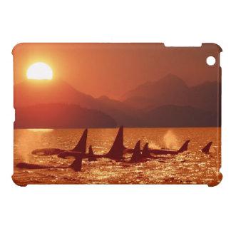 Puesta del sol de la orca