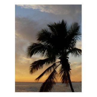 Puesta del sol de la palma postal