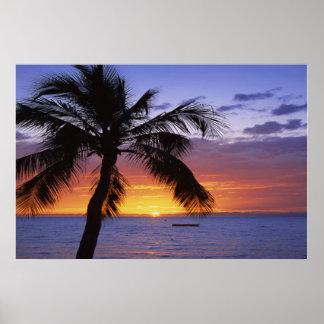 Puesta del sol de la palmera poster