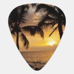 Puesta del sol de la palmera plumilla de guitarra