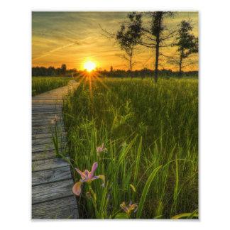 Puesta del sol de la pradera cojinete