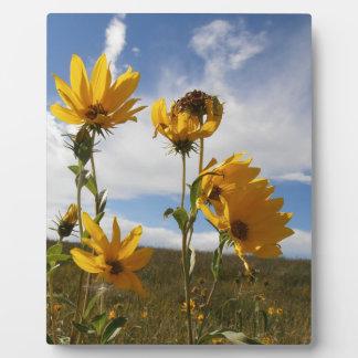 Puesta del sol de la pradera placas con foto
