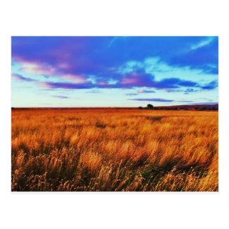 Puesta del sol de la pradera tarjeta postal