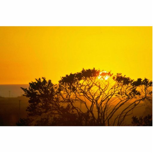 Puesta del sol de la sabana esculturas fotograficas