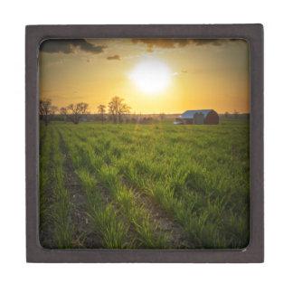 Puesta del sol de las tierras de labrantío cajas de recuerdo de calidad