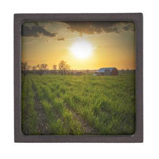 Puesta del sol de las tierras de labrantío cajas de regalo de calidad