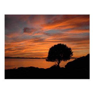 Puesta del sol de Madrone Tarjetas Postales