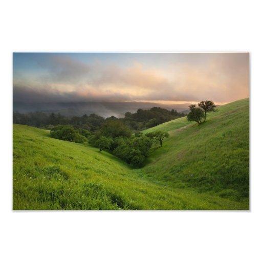 Puesta del sol de niebla de la primavera cojinete