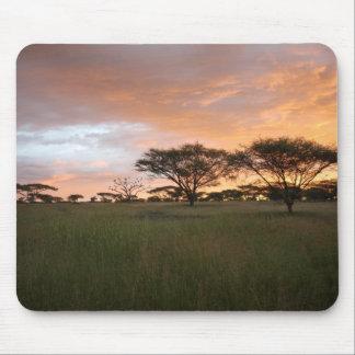 Puesta del sol de Serengeti Mousepad