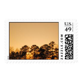 Puesta del sol del árbol timbres postales