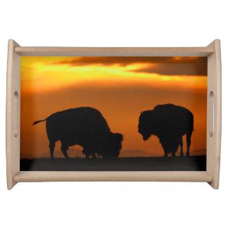 puesta del sol del bisonte bandejas